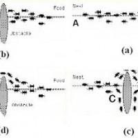 کاهش مصرف انرژی در شبکه های حسگر بی سیم چند رسانه ای با استفاده از الگوریتم کلونی مورچگان