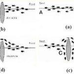 الگوریتم مورچه